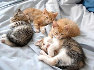 Free Kittens!, NSW Maroubra Eastern Suburbs Preview
