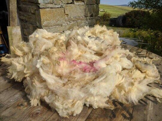 Organic Sheep Fleece, Native UK Hill Breed, Warm and versatile,Min weight1.4 kg.