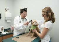 Registered RVT  Veterinarian Technologist Job Offer Animal Hosp.