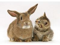 Cat-sitter & house-sitting; hampstead, islington, westminster, camden, greenwich, clapham, hackney