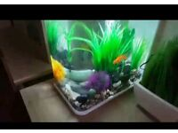 Biorb flow life fish tank