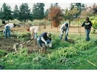 Community garden help