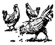 Chicken Rubber Stamp