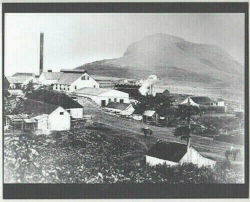 RARE HANA SUGAR PLANTATION MAUI 1900