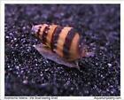 Live Snails