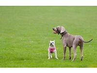 It's a Dogs life Dog walking services Bexleyheath and surrounding area.