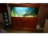 4ft fish tank and cabinet