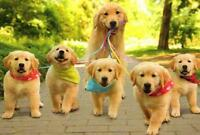 Dog walker and Daycare