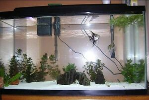 45 gallon fish tank in very good cond. comes with hood n lights