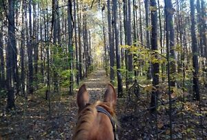 Searching for a family/trail horse