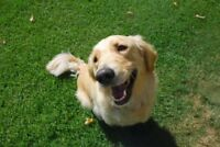 Victoria's cheapest and most reliable dog walking service