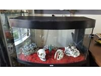 Juwel Vision 180 Bow Front Aquarium and Cabinet Black Air pump Heater Ornaments Red Gravel Food