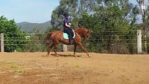 Experienced Rider looking for work Thagoona Ipswich City Preview