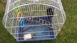 Birds Cage for sale Noble Park Greater Dandenong Preview