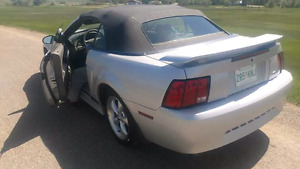 2002 mustang beautiful condition