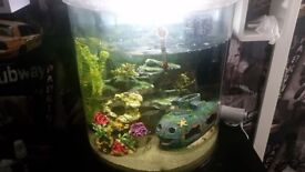 60ltr fish tank with accessories