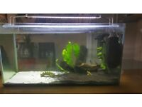 fish tank and stand see pic