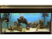 3ft marine aquarium with contents