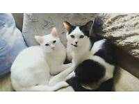 Two cats for sale