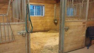 Boarding at Rougemont/four winds equestrian Cambridge Kitchener Area image 7
