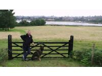 Riks K9 Services. Fully insured and trained dog walker. 30 and 60 min walks, solo or group
