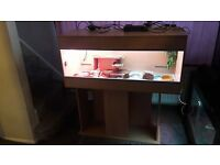 bearded dragon and 4ft full set up