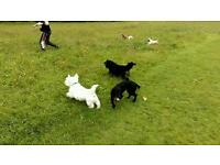 SCOOBY DOO PET SITTERS & DOG WALKERS BANGOR - DOGGY DAY CARE, DOG WALKING BANGOR, PET SITTING BANGOR