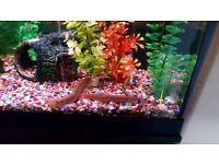 Fish tank 180L for sale ,urgent