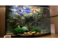 Custom Tropical fish tank setup