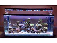 Marine Aquarium Equipment for Sale