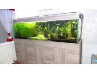 Aquarium 800L