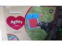 Dog agility flyball