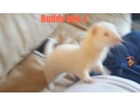 Hi im buddy im looking for a new home :))