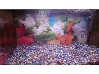 I have fish tank for sale , 55 litters with rock and pump.