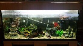 160L aquarium for sale