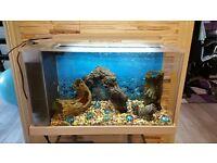 Fluval Spec aquarium full set up