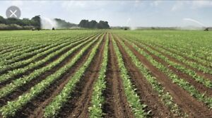 Looking for Rentable or share crop Lambton county