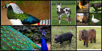 EXOTIC BIRD AND LIVESTOCK SALE!
