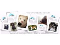 Woofy Walkers - Dog Walking & Pet Services