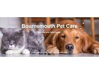 Dog Walking | Dog Walker | Pet Sitting | Cat Feeding in Bournemouth