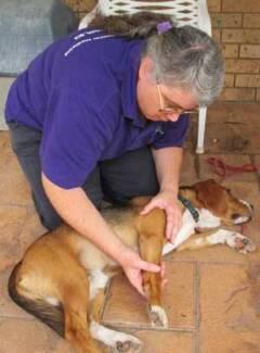 Cattai Canine Massage Therapy