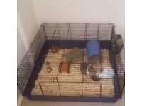Massive square guinea pig / rabbit cage