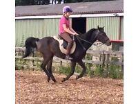 Safe Horse for Share - Hartley Wintney, Fleet, Farnborough
