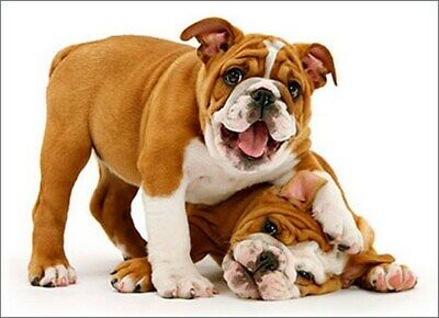 Playful Bulldog Puppies Funny Dog Birthday Card - Greeting Card by Avanti Press