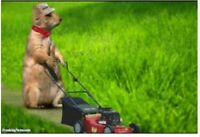 $25.00 Lawn Cutting