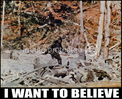 Poster Of Big Foot   I Want To Believe   24X36