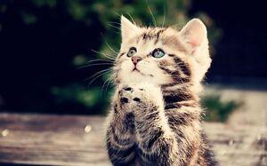 Recherche chaton à donner (2 à 4mois)