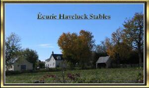Entrainement de chevaux et cours d'équitation.