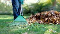 Yard work and other Odd Jobs done at great prices!