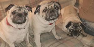 2 adults seeking pet friendly rental
